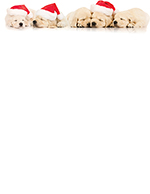 Santa Puppies Letterhead 80CT