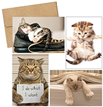 Kitty Thoughts Notecards 20CT
