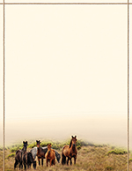 Horse Meadow Letterhead 80CT