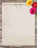 Three Gerber Daisies Letterhead 80CT