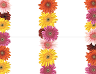 Gerbera Daisies 4 Up Postcard